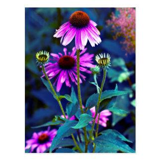 Purple Coneflowers Tarjetas Postales
