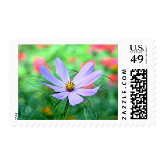 Purple cosmea flower postage