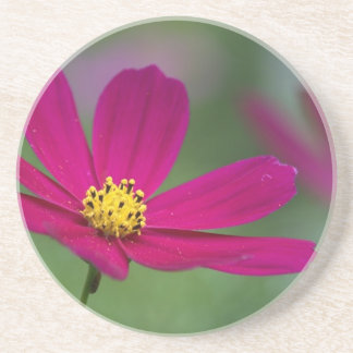 Purple Cosmos  Coaster