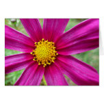 Purple Cosmos Flower Beautiful Wildflower Card