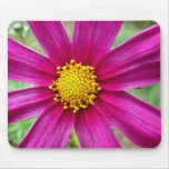 Purple Cosmos Flower Beautiful Wildflower Mouse Pad