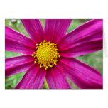 Purple Cosmos Flower Card