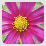 Purple Cosmos Flower Square Sticker