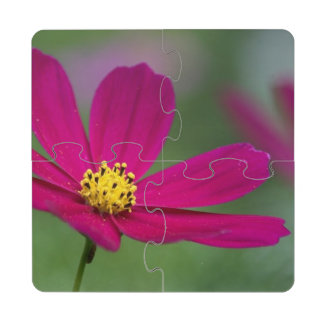 Purple Cosmos Puzzle Coaster
