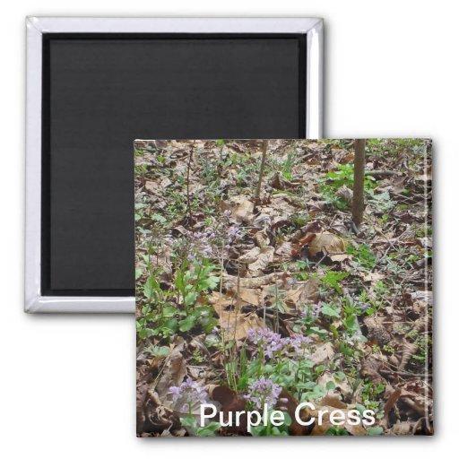 Purple Cress Magnet