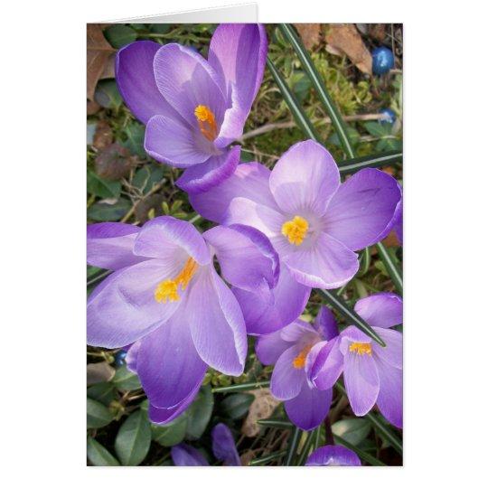 Purple Crocus Blank Note Cards