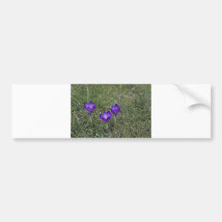 purple crocus bumper stickers