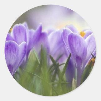 purple crocus classic round sticker