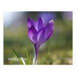 Purple Crocus DSC0704 Personalized Announcements