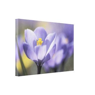 Purple Crocus Floral Canvas Print