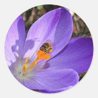 Purple crocus flower and a bee classic round sticker