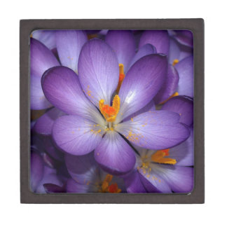 PURPLE CROCUS FLOWERS PREMIUM KEEPSAKE BOXES