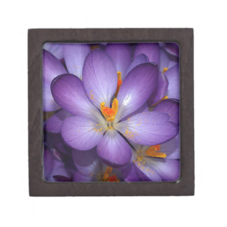 PURPLE CROCUS FLOWERS PREMIUM JEWELRY BOXES