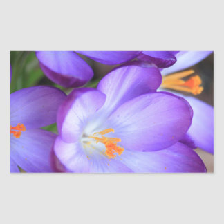Purple Crocus For FMS Awareness Rectangular Sticker