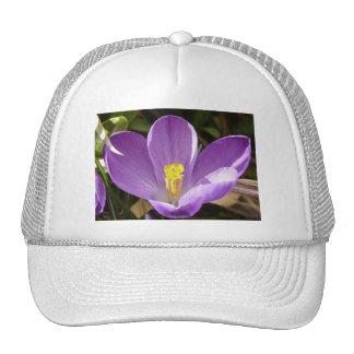 purple crocus trucker hat