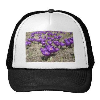 Purple Crocus Hats