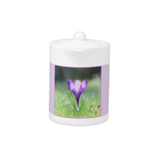 Purple Crocus in spring 03.3 Teapot