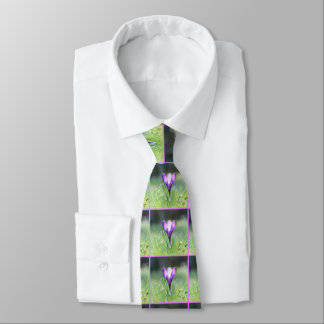 Purple Crocus in spring 03.3 Tie