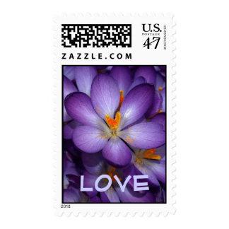 Purple Crocus Love Postage Stamp