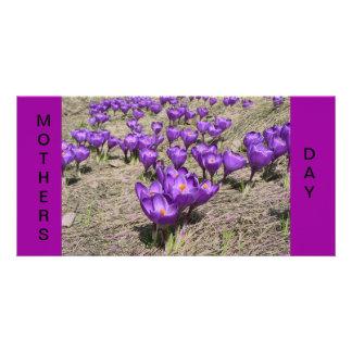 Purple Crocus Photo Card