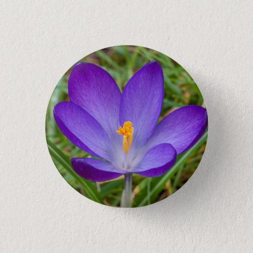 Purple Crocus Spring Flower Button