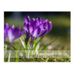 Purple Crocuses DSC0703 Post Cards