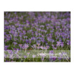 Purple Crocuses DSC5438 Postcard