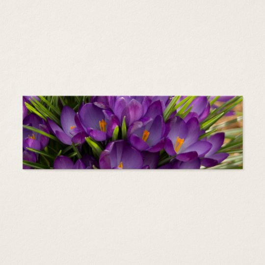Purple Crocuses DSC5938 Mini Business Card