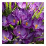 Purple Crocuses DSC5938 Personalized Announcements