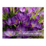 Purple Crocuses DSC5938 Postcard
