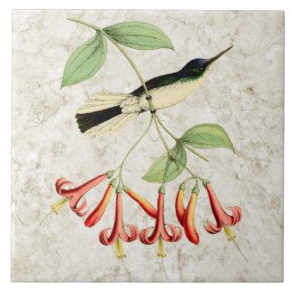 Purple Crown Fairy Hummingbird Vintage Nature Art Tile