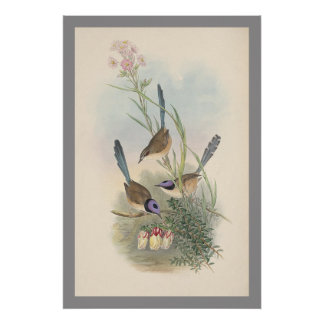Purple-crowned Fairywren Poster
