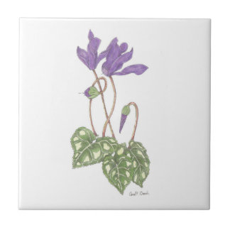 Purple Cyclamen Tile