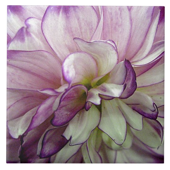 Purple Dahlia Ceramic Tile