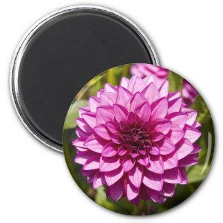Purple Dahlia Magnet
