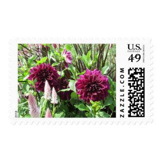 Purple Dahlias Postage Stamps
