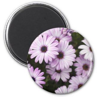 Purple Daisies 2 Inch Round Magnet