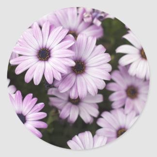 Purple Daisies Classic Round Sticker