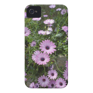 Purple daisies iPhone 4 cover
