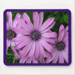 Purple Daisies Mouse Mats