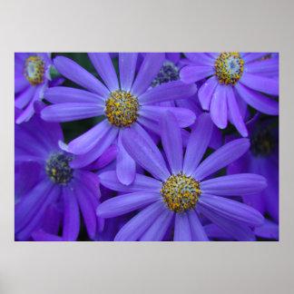 Purple Daisies - Poster #1