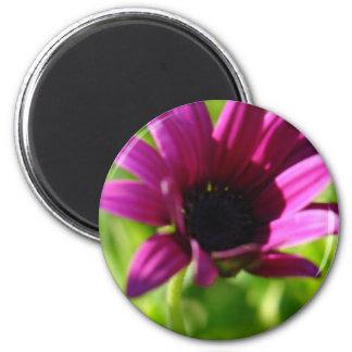 Purple Daisy 2 Inch Round Magnet