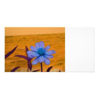 purple daisy against blue colored flower photo card