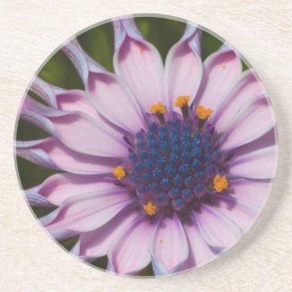 Purple Daisy Coaster coaster