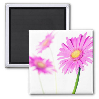 Purple Daisy Customized Lavender Daisies Template 2 Inch Square Magnet
