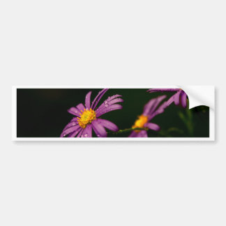 Purple Daisy Flower Bumper Sticker
