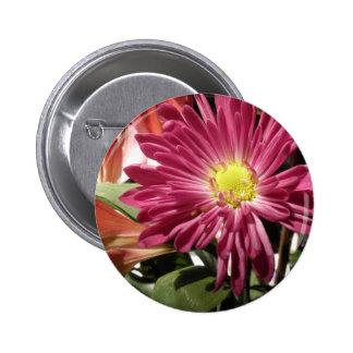Purple Daisy Flower Daisies Flowers Photo Button