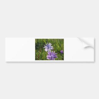 Purple daisy flowers on green background bumper sticker