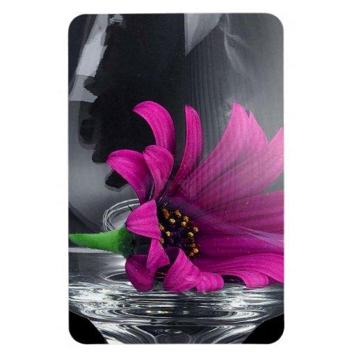 Purple Daisy in Glass Magnet