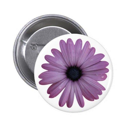 Purple Daisy Like Flower Osteospermum ecklonis Button